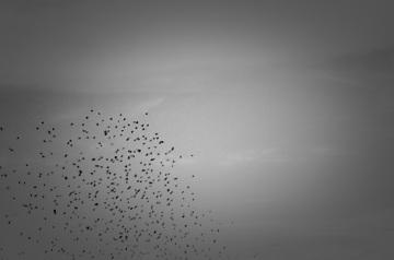 birdsa1600